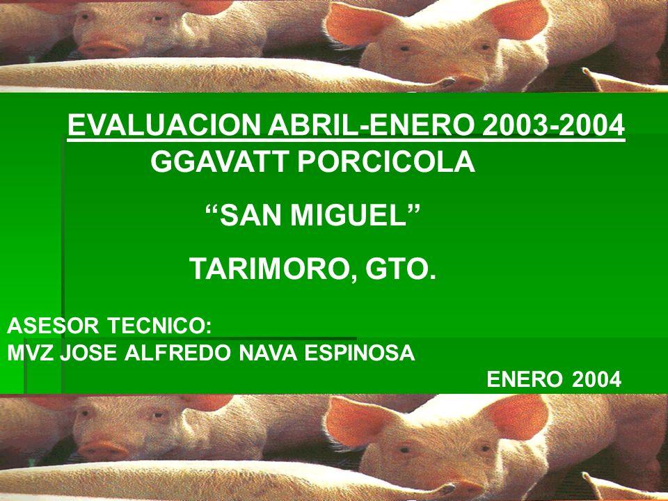 EVALUACION ABRIL-ENERO 2003-2004 GGAVATT PORCICOLA SAN MIGUEL TARIMORO, GTO. ASESOR TECNICO: MVZ JOSE ALFREDO NAVA ESPINOSA ENERO 2004