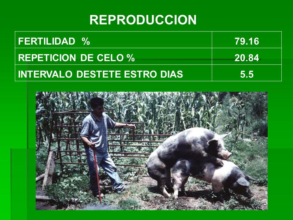 REPRODUCCION FERTILIDAD %79.16 REPETICION DE CELO %20.84 INTERVALO DESTETE ESTRO DIAS5.5