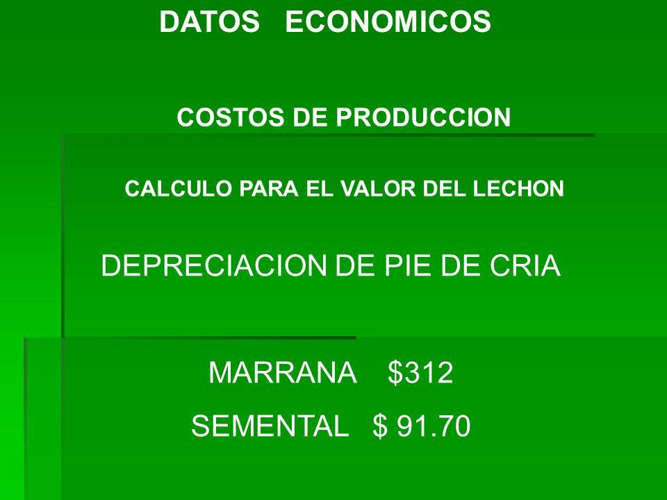 DATOS ECONOMICOS COSTOS DE PRODUCCION CALCULO PARA EL VALOR DEL LECHON DEPRECIACION DE PIE DE CRIA MARRANA $312 SEMENTAL $ 91.70