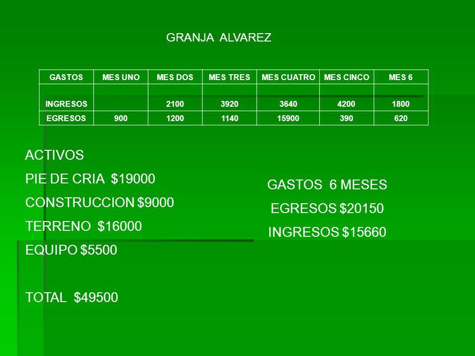 GRANJA ALVAREZ GASTOSMES UNOMES DOSMES TRESMES CUATROMES CINCOMES 6 INGRESOS21003920364042001800 EGRESOS9001200114015900390620 ACTIVOS PIE DE CRIA $19