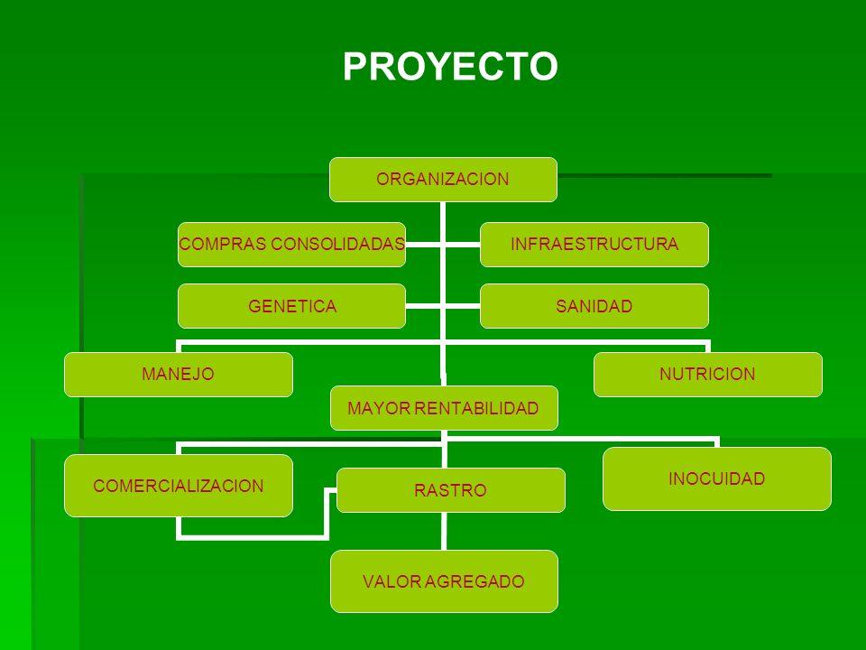ORGANIZACION MANEJO MAYOR RENTABILIDAD VALOR AGREGADOINOCUIDADCOMERCIALIZACION RASTRO NUTRICION COMPRAS CONSOLIDADAS INFRAESTRUCTURA GENETICASANIDAD P