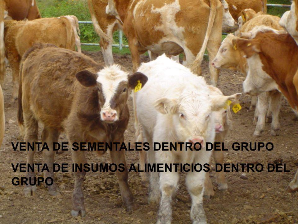 VENTA DE SEMENTALES DENTRO DEL GRUPO VENTA DE INSUMOS ALIMENTICIOS DENTRO DEL GRUPO