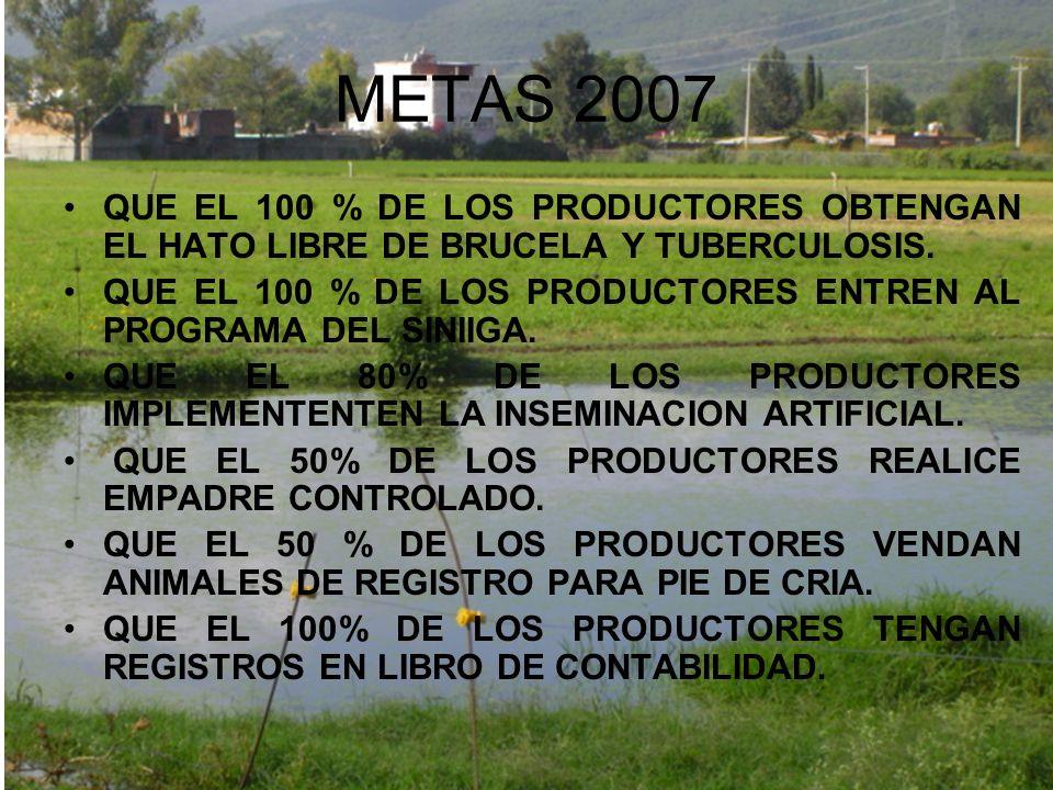METAS 2007 QUE EL 100 % DE LOS PRODUCTORES OBTENGAN EL HATO LIBRE DE BRUCELA Y TUBERCULOSIS. QUE EL 100 % DE LOS PRODUCTORES ENTREN AL PROGRAMA DEL SI