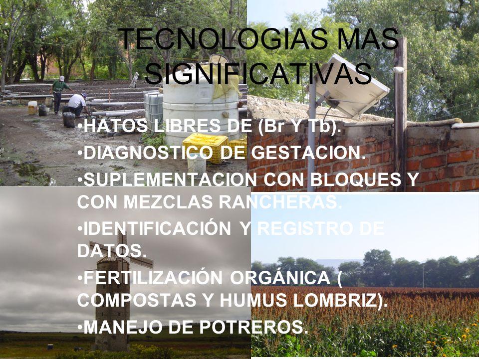TECNOLOGIAS MAS SIGNIFICATIVAS HATOS LIBRES DE (Br Y Tb). DIAGNOSTICO DE GESTACION. SUPLEMENTACION CON BLOQUES Y CON MEZCLAS RANCHERAS. IDENTIFICACIÓN