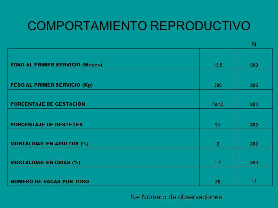 COMPORTAMIENTO REPRODUCTIVO EDAD AL PRIMER SERVICIO (Meses) 13.5800 PESO AL PRIMER SERVICIO (Kg) 300800 PORCENTAJE DE GESTACIÓN 79.43800 PORCENTAJE DE