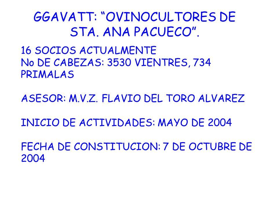 GGAVATT: OVINOCULTORES DE STA. ANA PACUECO. 16 SOCIOS ACTUALMENTE No DE CABEZAS: 3530 VIENTRES, 734 PRIMALAS ASESOR: M.V.Z. FLAVIO DEL TORO ALVAREZ IN