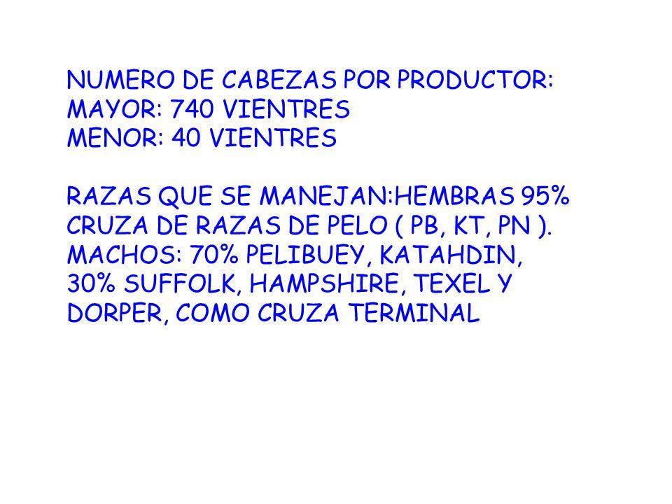 NUMERO DE CABEZAS POR PRODUCTOR: MAYOR: 740 VIENTRES MENOR: 40 VIENTRES RAZAS QUE SE MANEJAN:HEMBRAS 95% CRUZA DE RAZAS DE PELO ( PB, KT, PN ). MACHOS