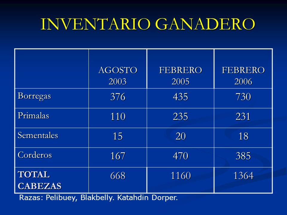 INVENTARIO GANADERO AGOSTO 2003 FEBRERO 2005 FEBRERO 2006 Borregas376435730 Primalas110235231 Sementales152018 Corderos167470385 TOTAL CABEZAS 66811601364 Razas: Pelibuey, Blakbelly.