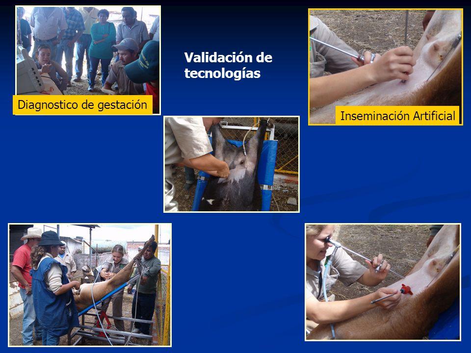 Practicas, visitas y giras Reunión mensual Practica técnico-productores Practica Practica I.A Dx.