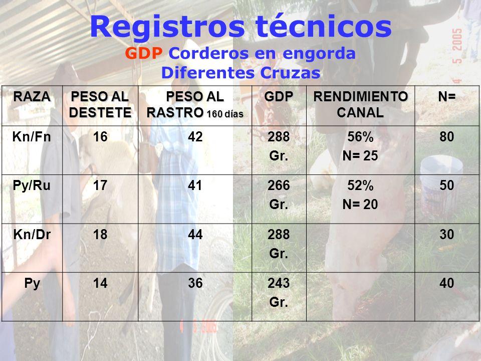 Registros técnicos GDP Corderos en engorda Diferentes CruzasRAZA PESO AL DESTETE PESO AL RASTRO 160 días GDP RENDIMIENTO CANAL N= Kn/Fn1642288 Gr. 56%
