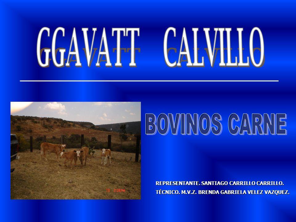 REPRESENTANTE. SANTIAGO CARRILLO CARRILLO. TÉCNICO. M.V.Z. BRENDA GABRIELA VELEZ VAZQUEZ.