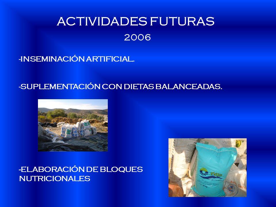 ACTIVIDADES FUTURAS 2006 -INSEMINACIÓN ARTIFICIAL. -SUPLEMENTACIÓN CON DIETAS BALANCEADAS. -ELABORACIÓN DE BLOQUES NUTRICIONALES