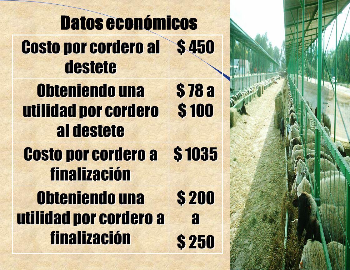 N=660 corderos Peso al nacimiento 3.65 Kg. Peso al destete 22.69 Kg.