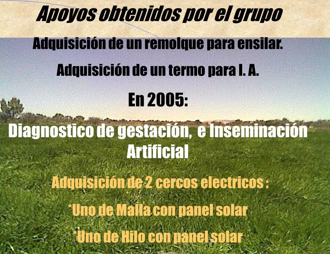 Apoyos obtenidos por el grupo Programa Alianza para el campo en el 2003 Adquisición de 26 sementales East- Friesian Adquisición de 1300 corderas de distintas razas.