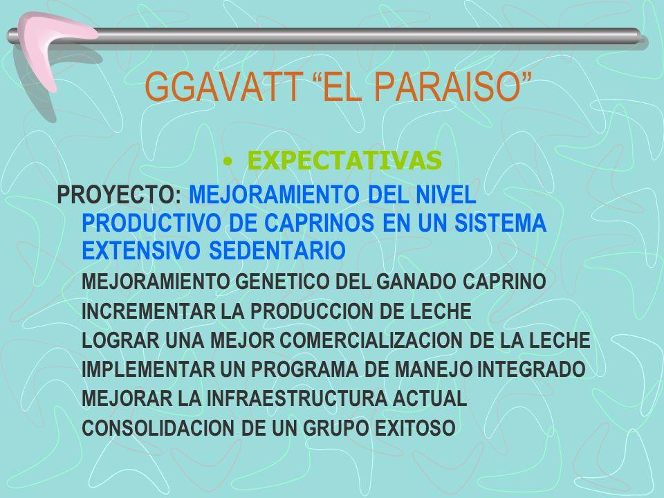 GGAVATT EL PARAISO EXPECTATIVAS PROYECTO: MEJORAMIENTO DEL NIVEL PRODUCTIVO DE CAPRINOS EN UN SISTEMA EXTENSIVO SEDENTARIO MEJORAMIENTO GENETICO DEL G