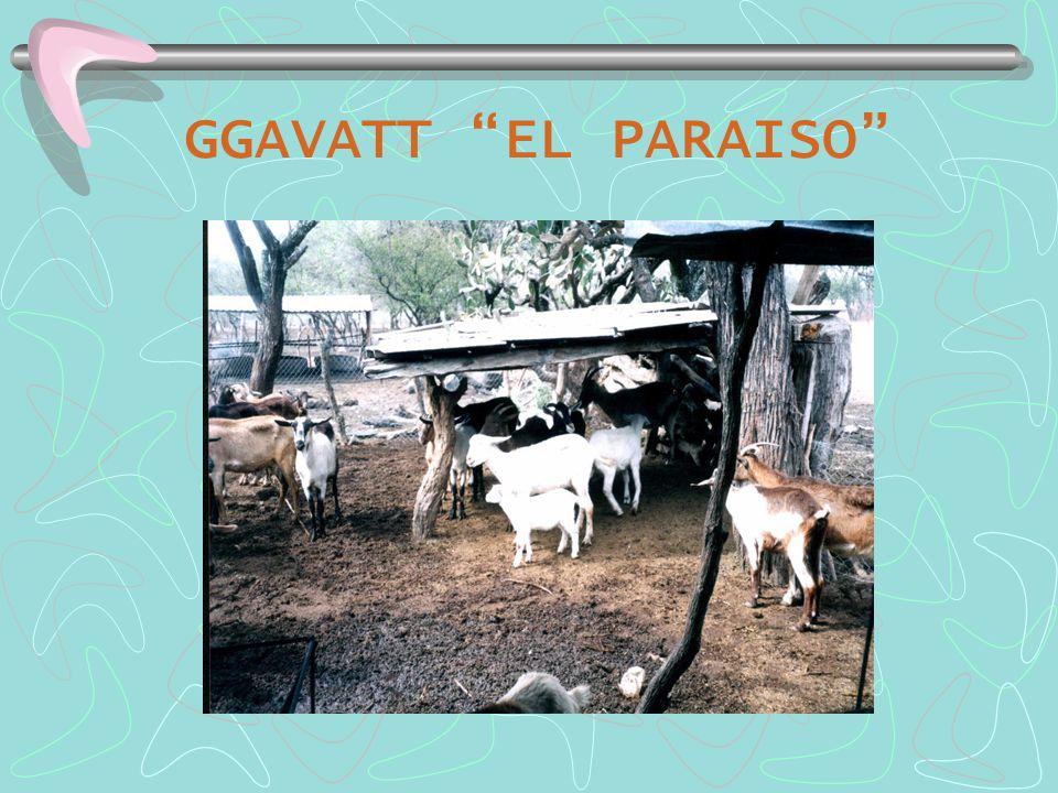 GGAVATT EL PARAISO