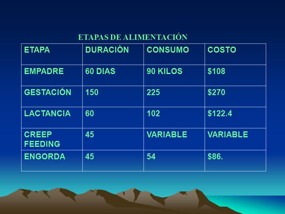 ETAPAS DE ALIMENTACIÓN ETAPADURACIÒNCONSUMOCOSTO EMPADRE60 DIAS90 KILOS$108 GESTACIÓN150225$270 LACTANCIA60102$122.4 CREEP FEEDING 45VARIABLE ENGORDA4