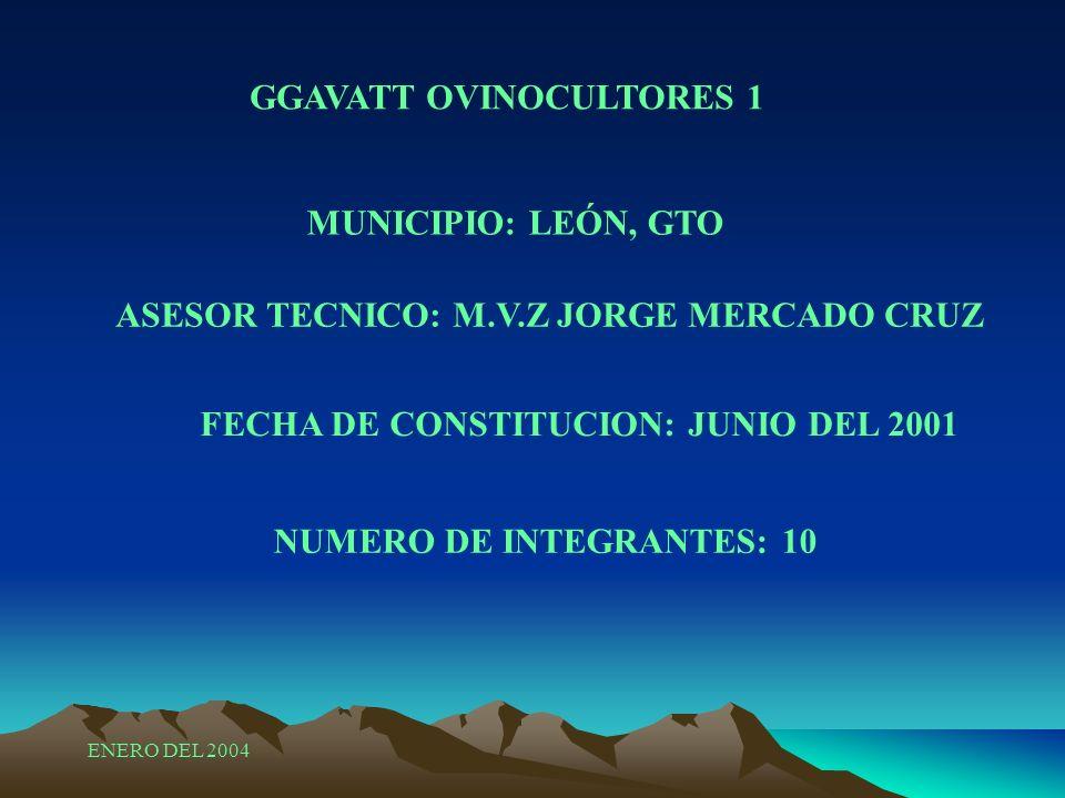 GGAVATT OVINOCULTORES 1 MUNICIPIO: LEÓN, GTO ASESOR TECNICO: M.V.Z JORGE MERCADO CRUZ FECHA DE CONSTITUCION: JUNIO DEL 2001 NUMERO DE INTEGRANTES: 10