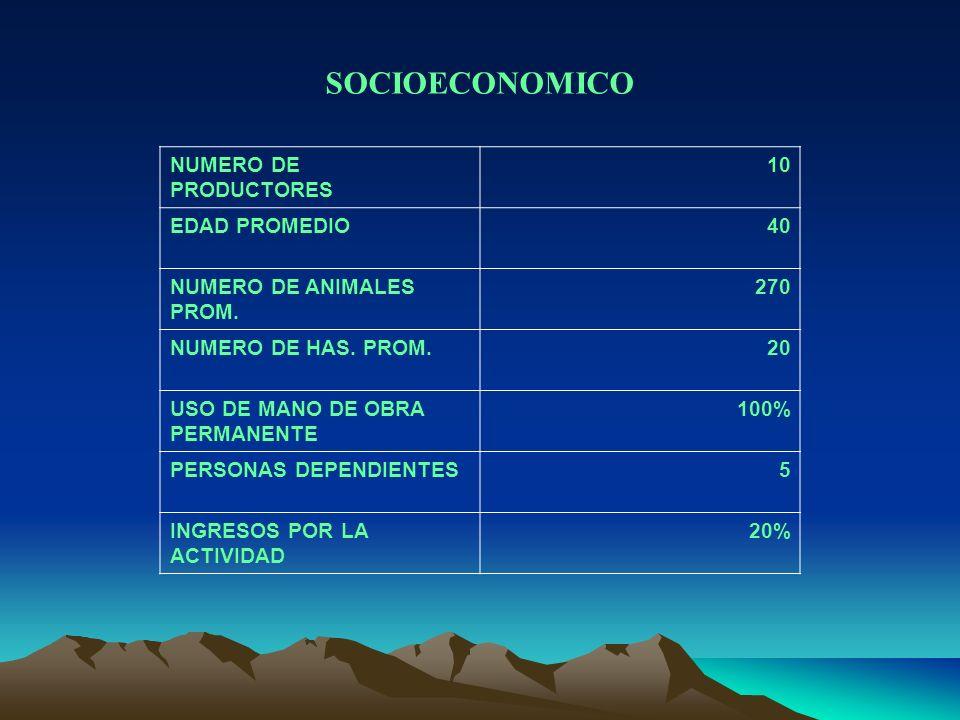 SOCIOECONOMICO NUMERO DE PRODUCTORES 10 EDAD PROMEDIO40 NUMERO DE ANIMALES PROM. 270 NUMERO DE HAS. PROM.20 USO DE MANO DE OBRA PERMANENTE 100% PERSON