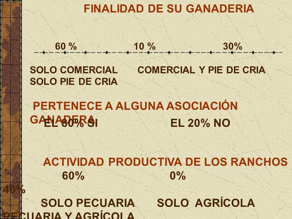 FINALIDAD DE SU GANADERIA 60 % 10 % 30% SOLO COMERCIAL COMERCIAL Y PIE DE CRIA SOLO PIE DE CRIA PERTENECE A ALGUNA ASOCIACIÓN GANADERA EL 80% SI EL 20% NO ACTIVIDAD PRODUCTIVA DE LOS RANCHOS 60% 0% 40% SOLO PECUARIA SOLO AGRÍCOLA PECUARIA Y AGRÍCOLA