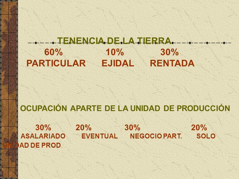 TENENCIA DE LA TIERRA 60% 10% 30% PARTICULAR EJIDAL RENTADA OCUPACIÓN APARTE DE LA UNIDAD DE PRODUCCIÓN 30% 20% 30% 20% ASALARIADO EVENTUAL NEGOCIO PART.
