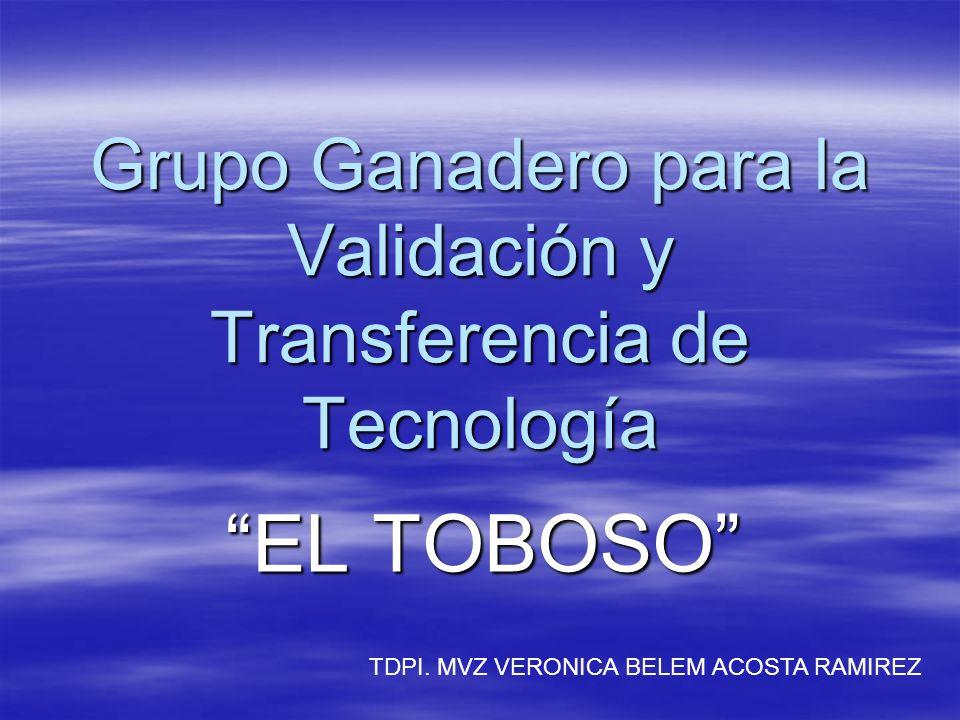 Grupo Ganadero para la Validación y Transferencia de Tecnología EL TOBOSO TDPI. MVZ VERONICA BELEM ACOSTA RAMIREZ