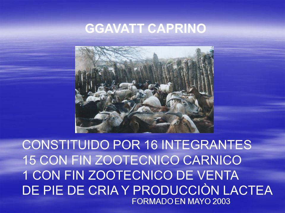 CONSTITUIDO POR 16 INTEGRANTES 15 CON FIN ZOOTECNICO CARNICO 1 CON FIN ZOOTECNICO DE VENTA DE PIE DE CRIA Y PRODUCCIÒN LACTEA FORMADO EN MAYO 2003 GGA