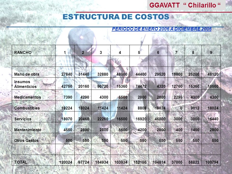 GGAVATT Chilarillo PERIODO DE ENERO 2006 A DICIEMBRE 2006 RANCHO123456789 Mano de obra278403144032880480004440029520180002520048120 Insumos Alimentici