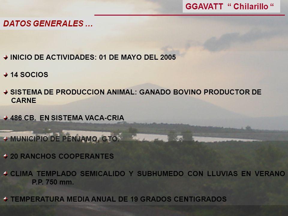 DATOS GENERALES … MUNICIPIO DE PENJAMO, GTO. 20 RANCHOS COOPERANTES CLIMA TEMPLADO SEMICALIDO Y SUBHUMEDO CON LLUVIAS EN VERANO P.P. 750 mm. TEMPERATU