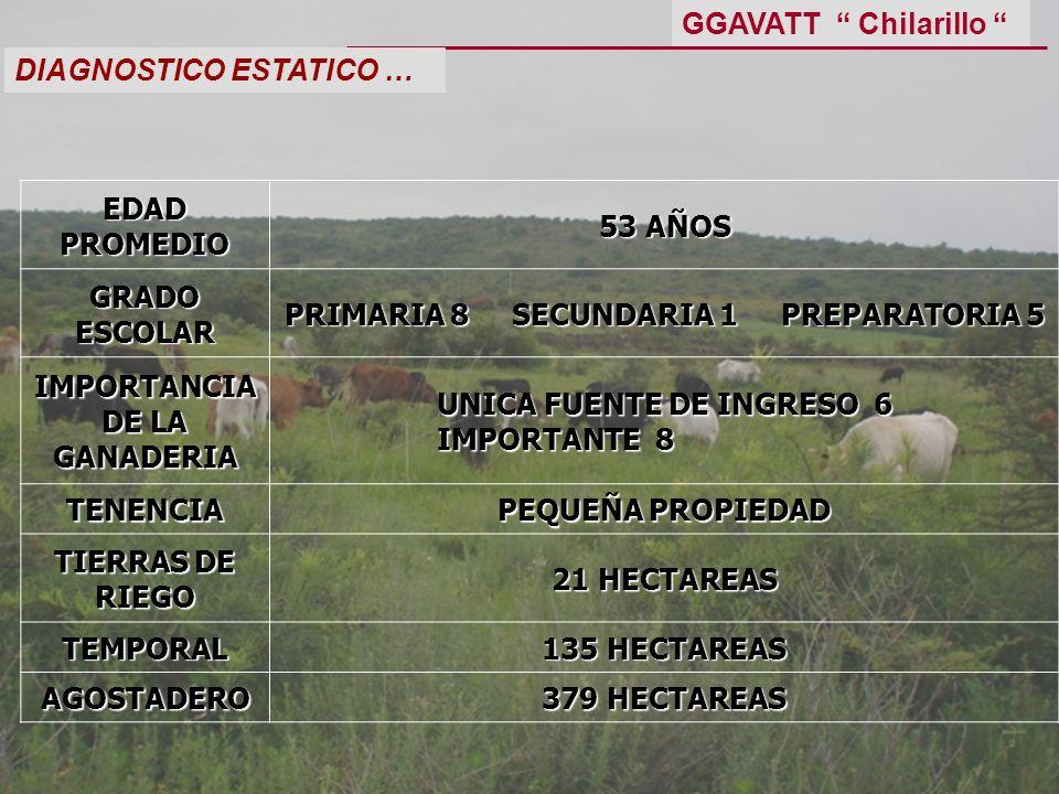 DIAGNOSTICO ESTATICO … EDAD PROMEDIO 53 AÑOS GRADO ESCOLAR PRIMARIA 8 SECUNDARIA 1 PREPARATORIA 5 IMPORTANCIA DE LA GANADERIA UNICA FUENTE DE INGRESO