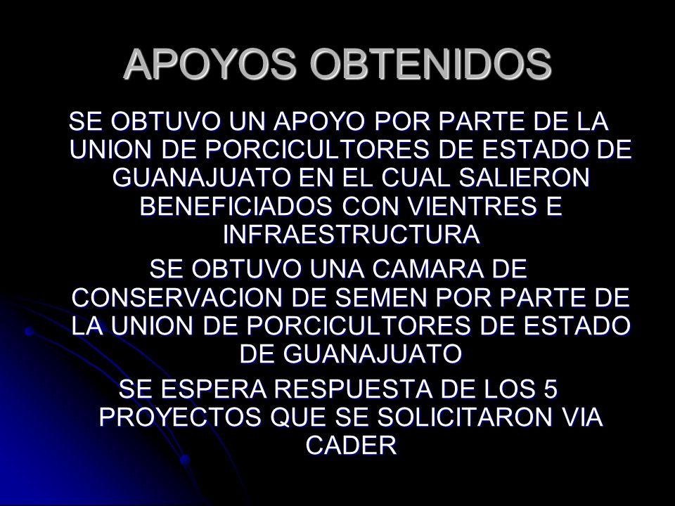 APOYOS OBTENIDOS SE OBTUVO UN APOYO POR PARTE DE LA UNION DE PORCICULTORES DE ESTADO DE GUANAJUATO EN EL CUAL SALIERON BENEFICIADOS CON VIENTRES E INF