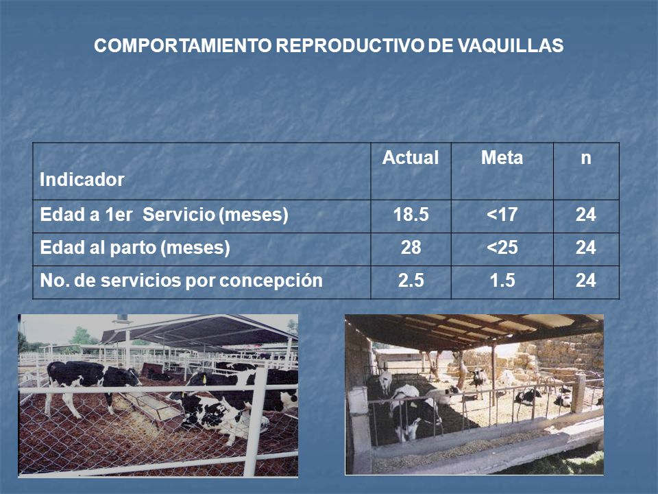 IMPACTO TECNÓLOGICO Periodo de análisis: agosto de 2003 a diciembre de 2006 COMPORTAMIENTO DE BECERRAS DURANTE LA CRIANZA Indicador ActualMetan Peso a