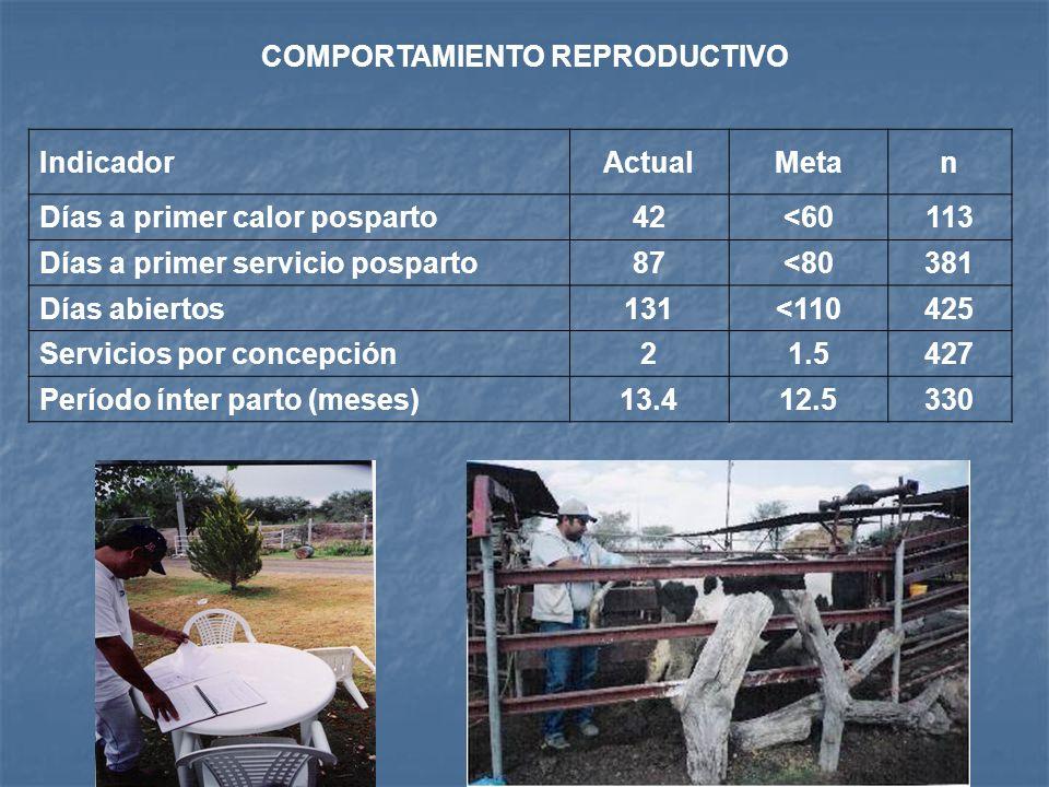 Indicador ActualMetan Edad a 1er Servicio (meses)18.5<1724 Edad al parto (meses)28<2524 No.