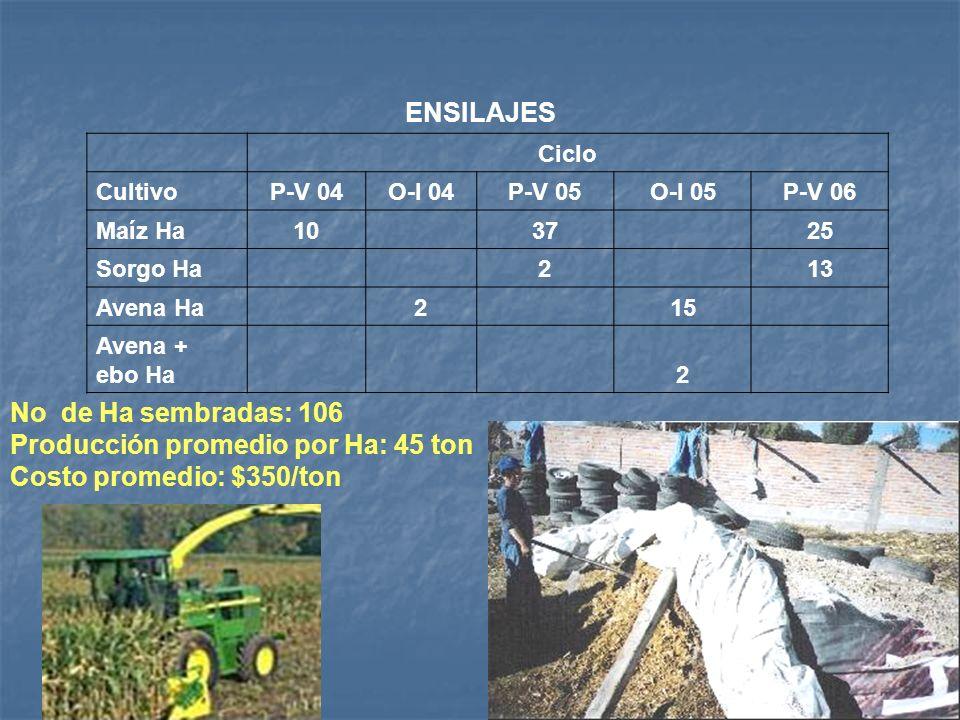 SIEMBRA DE CULTIVOS ALTERNATIVOS DE OTOÑO - INVIERNO CultivoO-I 04O-I 05O-I 06 Avena Ha51521 Avena + ebo Ha2 2 Rye Grass anual Ha 466