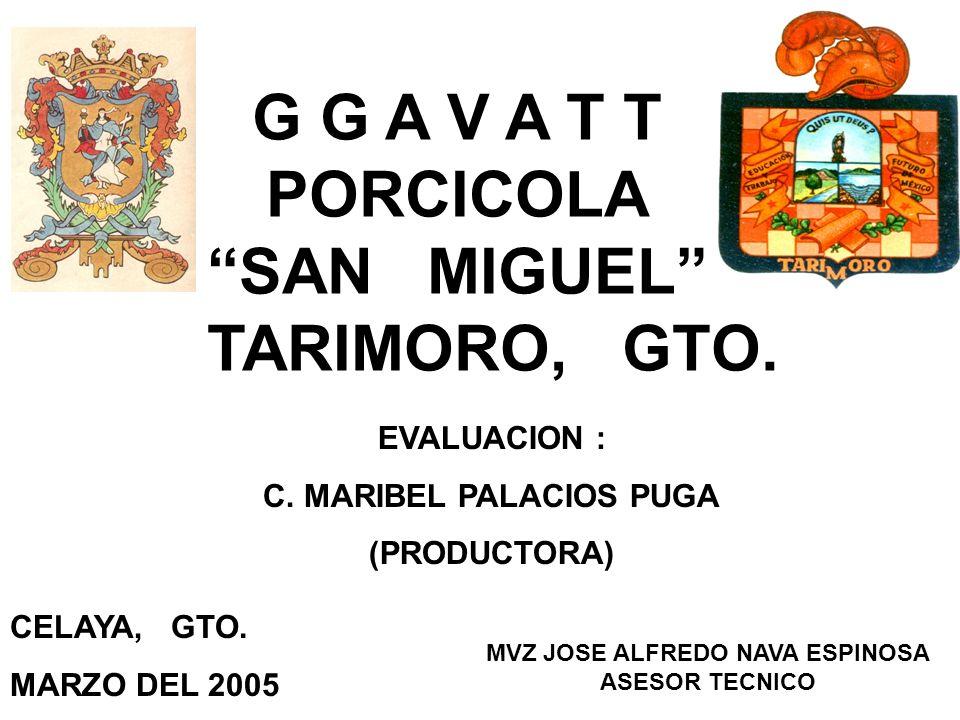 G G A V A T T PORCICOLA SAN MIGUEL TARIMORO, GTO. EVALUACION : C. MARIBEL PALACIOS PUGA (PRODUCTORA) MVZ JOSE ALFREDO NAVA ESPINOSA ASESOR TECNICO CEL