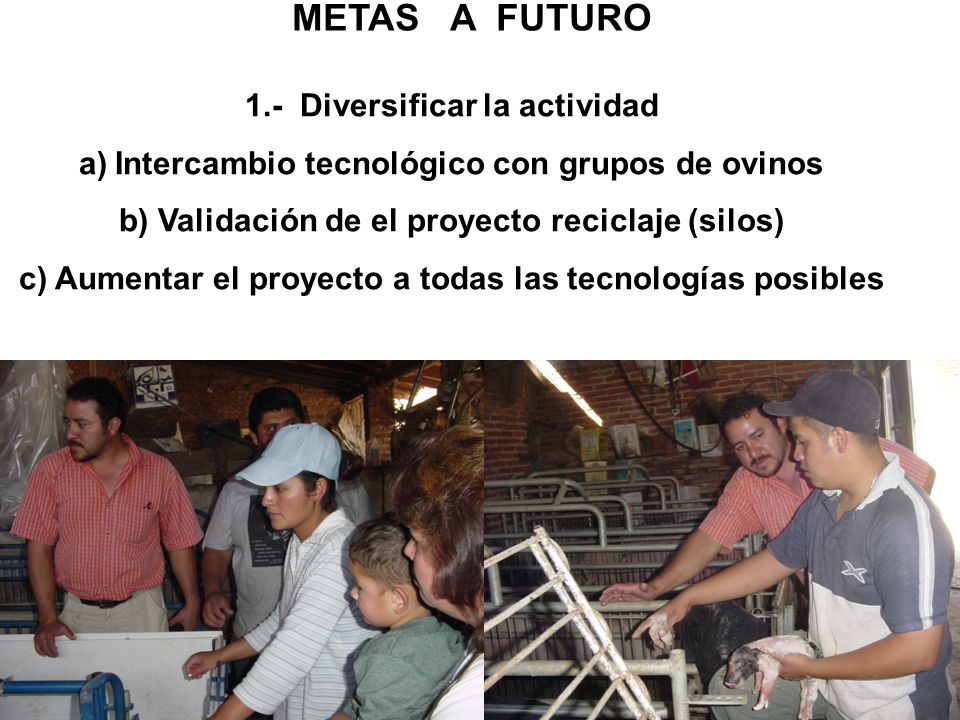 METAS A FUTURO 1.- Diversificar la actividad a)Intercambio tecnológico con grupos de ovinos b) Validación de el proyecto reciclaje (silos) c) Aumentar