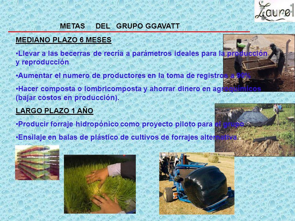 PRINCIPALES LOGROS GGAVATT EL LAUREL 1. Cultura en la toma de registros. 2. El 80% del Grupo insemina con éxito sus vacas y cuentan con 3 termos con a