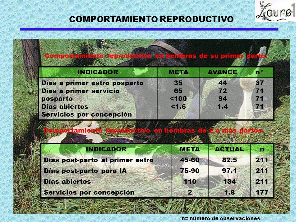 COMPORTAMIENTO REPRODUCTIVO INDICADORMETAAVANCEn* Días a primer estro posparto Días a primer servicio posparto Días abiertos Servicios por concepción 35 65 <100 <1.6 44 72 94 1.4 37 71 Comportamiento reproductivo en hembras de su primer parto.