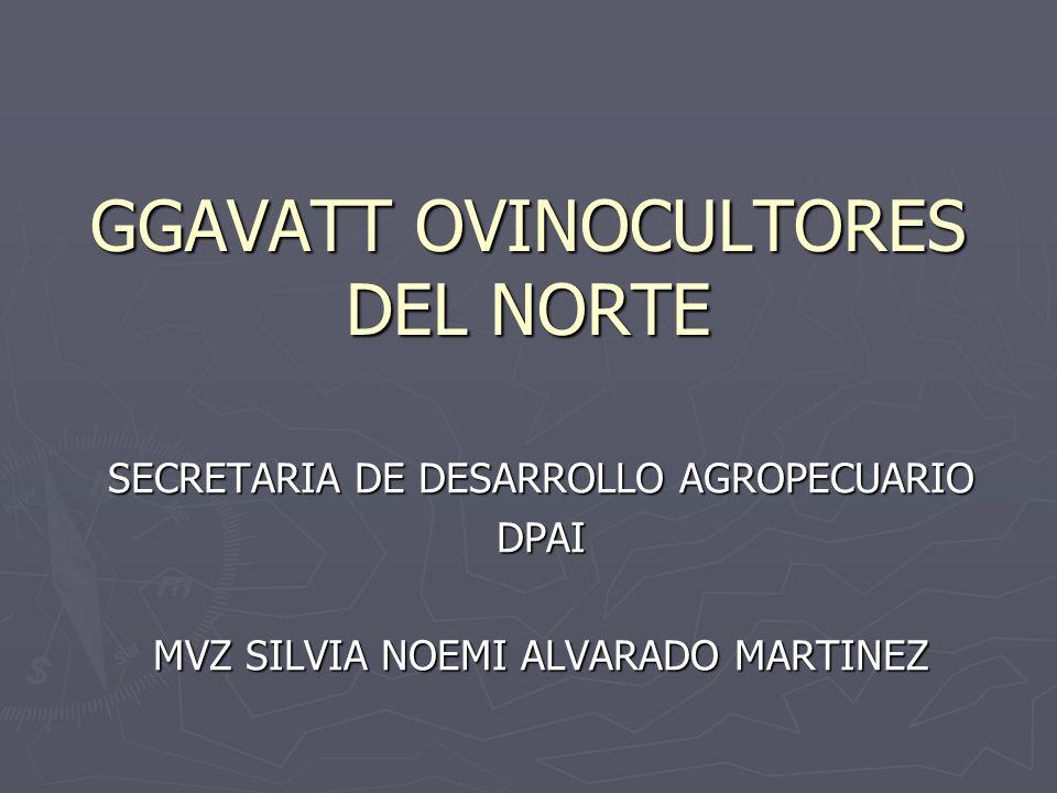 GGAVATT OVINOCULTORES DEL NORTE SECRETARIA DE DESARROLLO AGROPECUARIO DPAI MVZ SILVIA NOEMI ALVARADO MARTINEZ