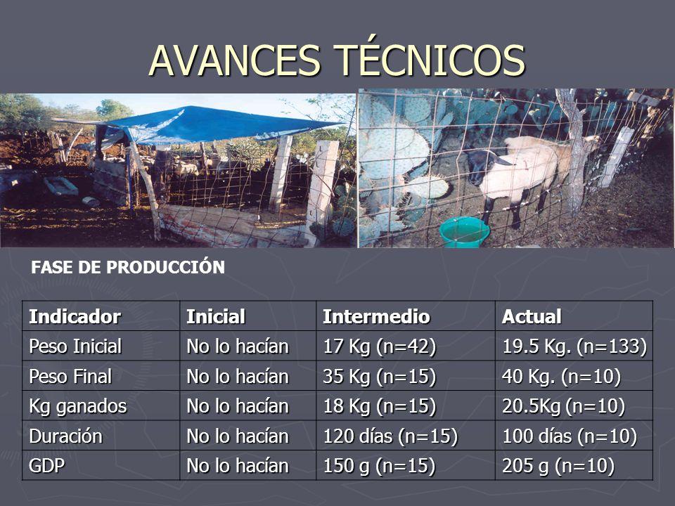 AVANCES TÉCNICOS FASE DE PRODUCCIÓNIndicadorInicialIntermedioActual Peso Inicial No lo hacían 17 Kg (n=42) 19.5 Kg.