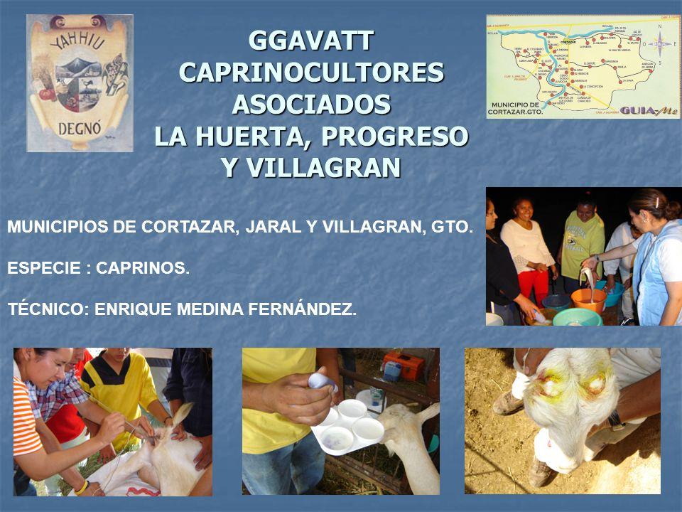 GGAVATT CAPRINOCULTORES ASOCIADOS LA HUERTA, PROGRESO Y VILLAGRAN MUNICIPIOS DE CORTAZAR, JARAL Y VILLAGRAN, GTO. ESPECIE : CAPRINOS. TÉCNICO: ENRIQUE