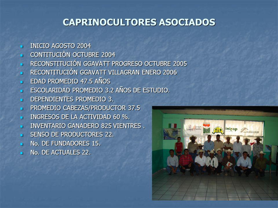 CAPRINOCULTORES ASOCIADOS INICIO AGOSTO 2004 INICIO AGOSTO 2004 CONTITUCIÒN OCTUBRE 2004 CONTITUCIÒN OCTUBRE 2004 RECONSTITUCIÓN GGAVATT PROGRESO OCTU