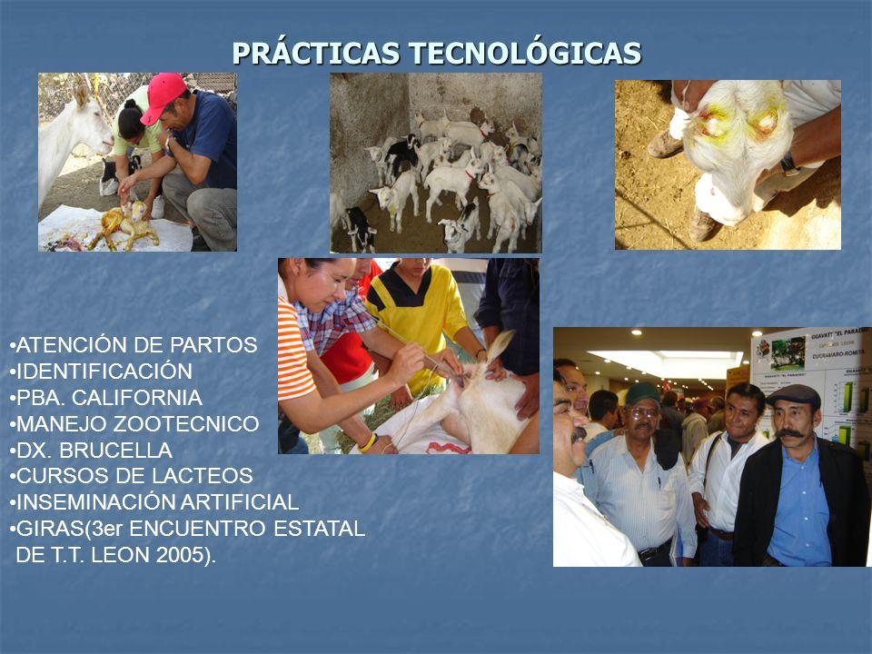 PRÁCTICAS DIFICILES DE ADOPTAR REGISTROS TÉCNICOS POR EL GRADO DE ANALFABETISMO REGISTROS TÉCNICOS POR EL GRADO DE ANALFABETISMO REGISTROS ECONÓMICOS POR EL GRADO DE ANALFABETISMO REGISTROS ECONÓMICOS POR EL GRADO DE ANALFABETISMO ENSILAJE LA FALTA DE EQUIPO ENSILAJE LA FALTA DE EQUIPO CALIDAD DE ORDEÑO FALTA DE EQUIPO E INFRAESTRUCTURA CALIDAD DE ORDEÑO FALTA DE EQUIPO E INFRAESTRUCTURA