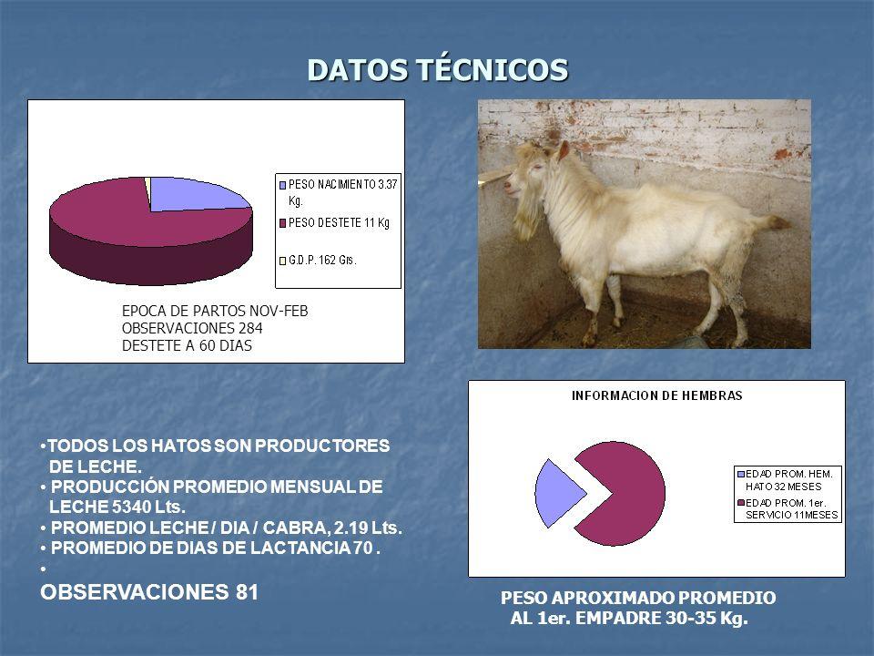 DATOS TÉCNICOS TODOS LOS HATOS SON PRODUCTORES DE LECHE. PRODUCCIÓN PROMEDIO MENSUAL DE LECHE 5340 Lts. PROMEDIO LECHE / DIA / CABRA, 2.19 Lts. PROMED