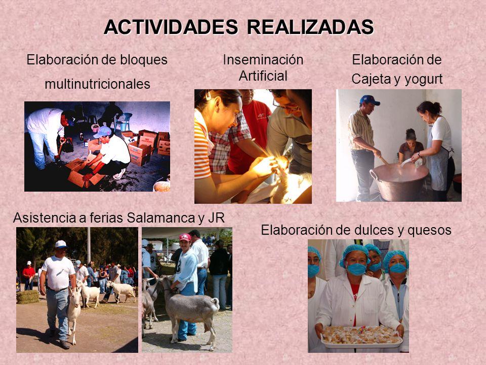 ACTIVIDADES REALIZADAS Elaboración de bloques multinutricionales Asistencia a ferias Salamanca y JR Elaboración de Cajeta y yogurt Inseminación Artifi