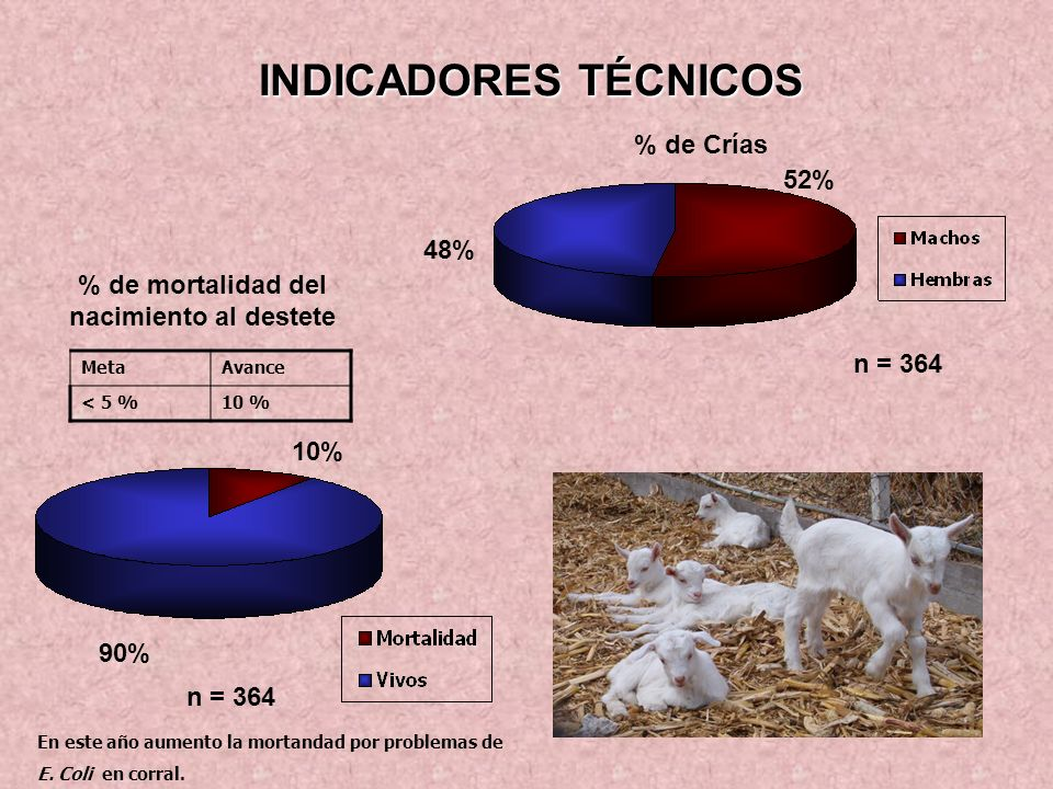 INDICADORES TÉCNICOS n = 364 48% 52% % de Crías % de mortalidad del nacimiento al destete 90% 10% n = 364 MetaAvance < 5 %10 % En este año aumento la