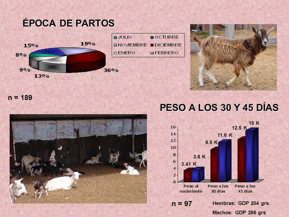 AVANCE EN EL PROYECTO MEJORAMIENTO DE LA SANIDAD EN LA ORDEÑA Y MANEJO REPRODUCTIVO DE LOS ANIMALES PARA ADAPTARSE AL MERCADO OBJETIVOS: Llevar a cabo un manejo rutinario de ordeña aplicando medidas de limpieza adecuada a los animales.