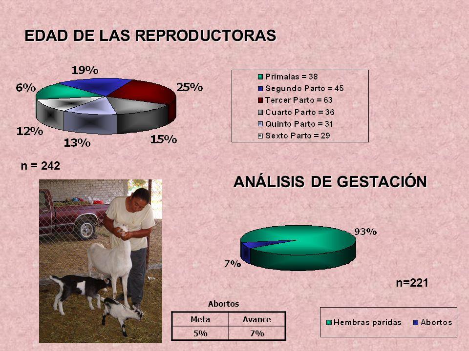 EDAD DE LAS REPRODUCTORAS n = 242 ANÁLISIS DE GESTACIÓN n=221 MetaAvance 5%7% Abortos