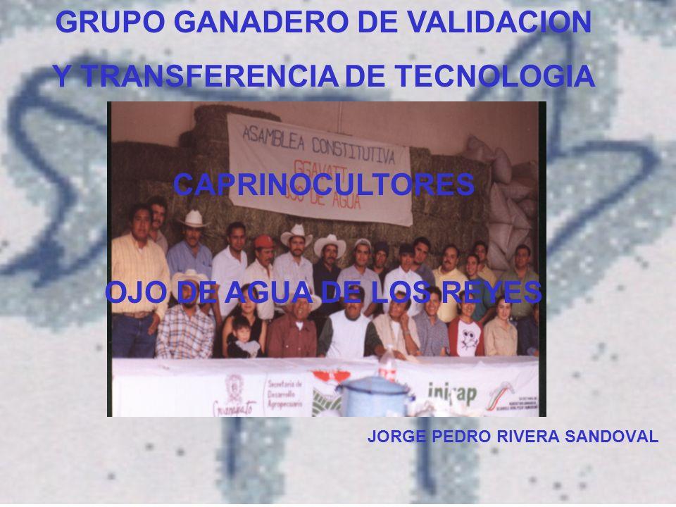 GRUPO GANADERO DE VALIDACION Y TRANSFERENCIA DE TECNOLOGIA CAPRINOCULTORES OJO DE AGUA DE LOS REYES JORGE PEDRO RIVERA SANDOVAL