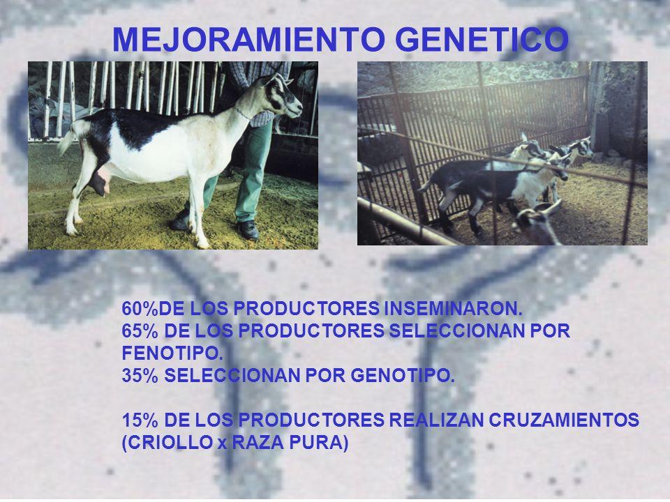 MEJORAMIENTO GENETICO 60%DE LOS PRODUCTORES INSEMINARON.